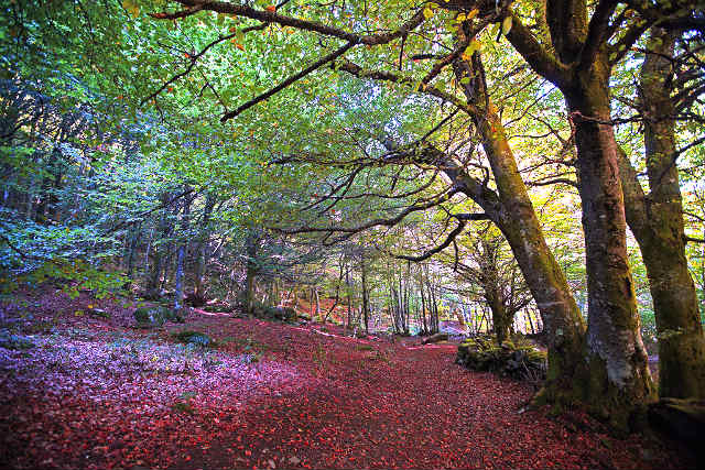 viajar por El Bierzo en otoño
