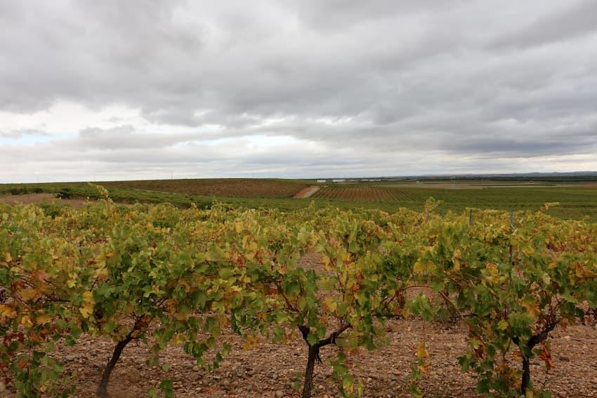 Paisaje de viñedos en La Seca - Enoturismo en Rueda