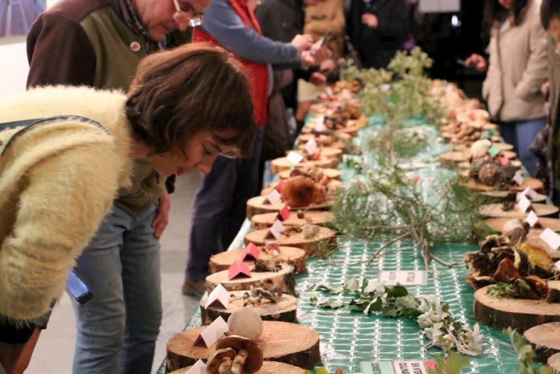 Exposición de setas en las Jornadas de la Micología en Navas del Marqués