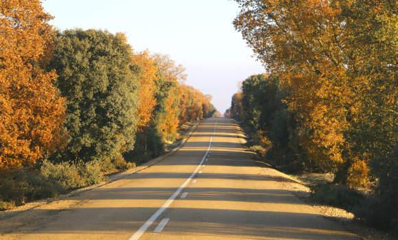 Carretera P901 entre Ampudia y Dueñas - Destino Castilla y León