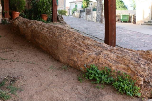 Uno de los árboles fósiles de Hacinas - Destino Castilla y León