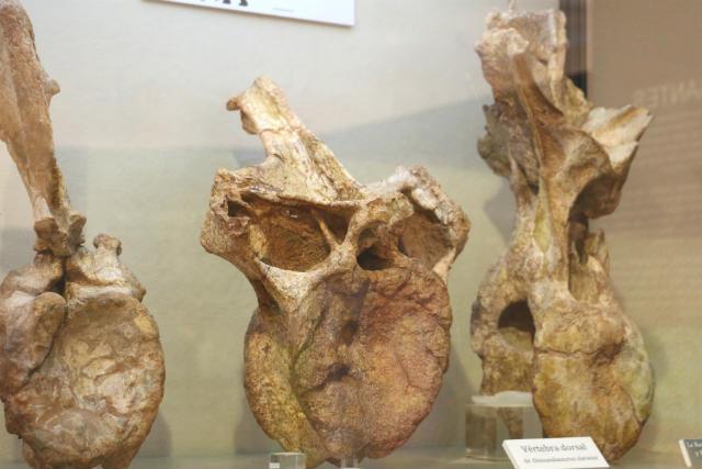 Restos de huesos fósiles de dinosaurios - Destino Castilla y León