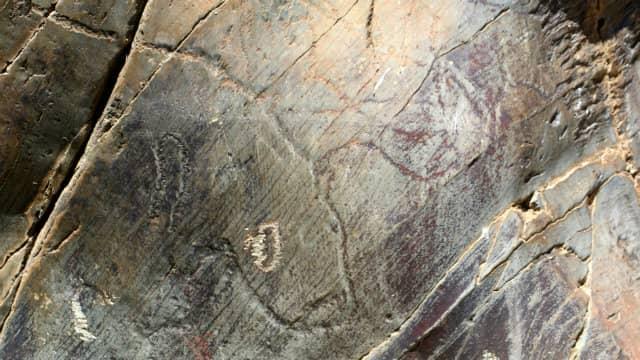 Ciervo representado en un panel - Destino Castilla y León