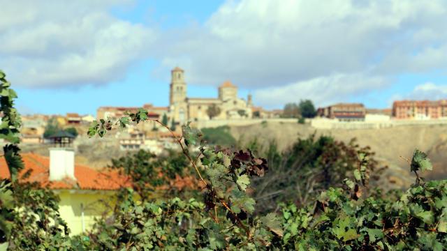 Viñedos en la vega de Toro - Destino Castilla y León