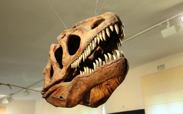 Cráneo de dinosaurio carnívoro - Destino Castilla y León