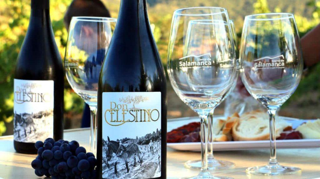 Cata de los vinos de la Bodega Don Celestino - Destino Castilla y León