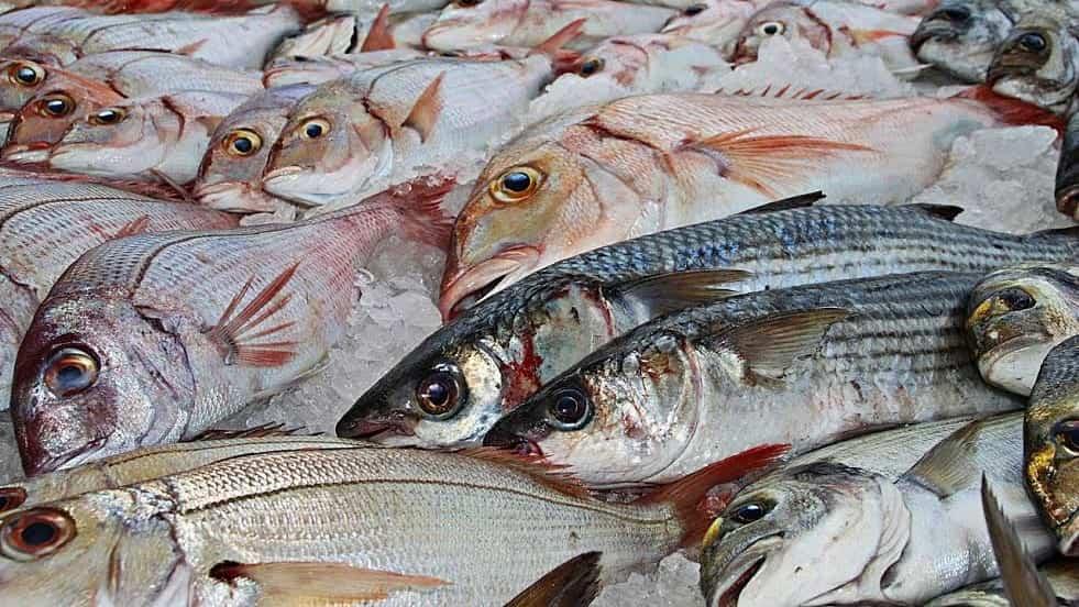 Rectas de pescado en Castilla y León