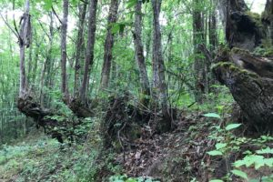 baño de bosque en el Bierzo
